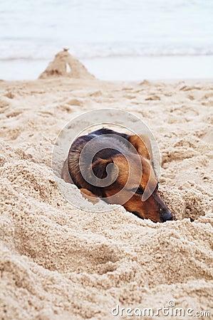 Thai dog sleep on beach