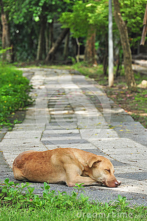 Thai dog sleeping on walkway