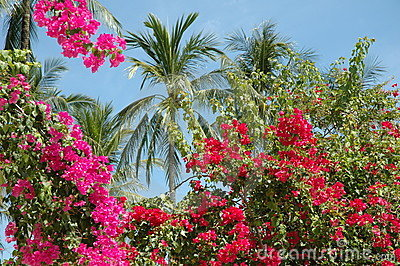 Thai flowers and palm