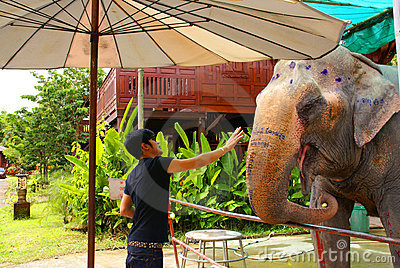 Thai man feeds an elephant. Editorial Stock Image