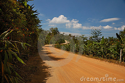 Thai road in jungle