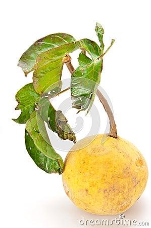 Thai tropical fruit (santol)