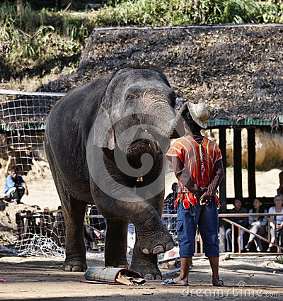 Thailand, Chiang Mai, asian elephant Editorial Stock Photo