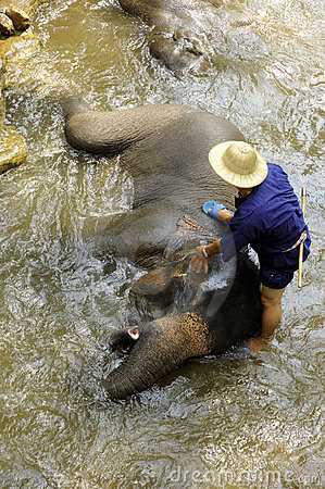 Thailand Region Of Chiang Mai- elephants