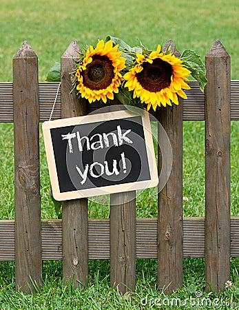 Free Thank You Royalty Free Stock Photos - 26935568