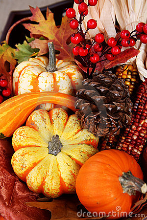 Free Thanksgiving Fall Harvest Stock Photo - 1477790