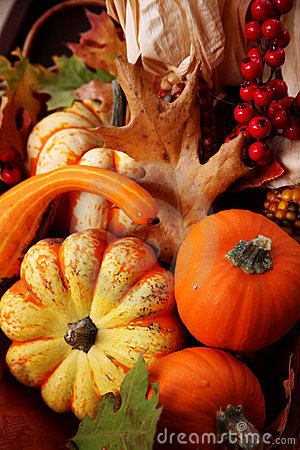 Free Thanksgiving Fall Harvest Royalty Free Stock Image - 1477856