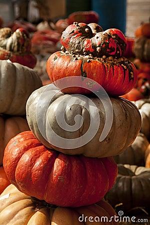 Thanksgiving Halloween Pumpkins