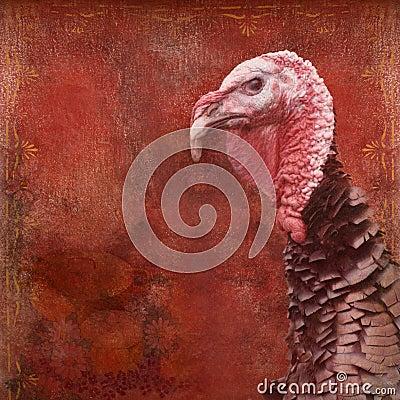 Thanksgiving Turkey Vintage background