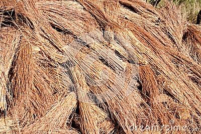 Thatch roof grass