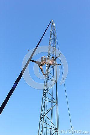 Free The Acrobatic Pirouettes At The Height Of The Bird`s Flight Stock Photo - 116623600