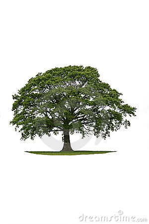 Free The Ancient Oak Stock Photo - 2766370
