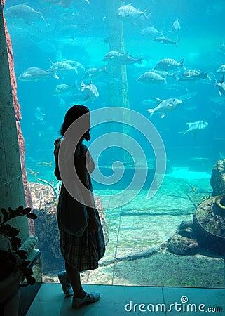Free The Aquarium Stock Images - 9290414