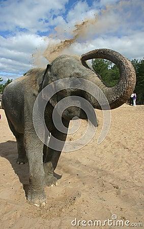 Free The Bathing Elephants 7 Stock Photo - 95130