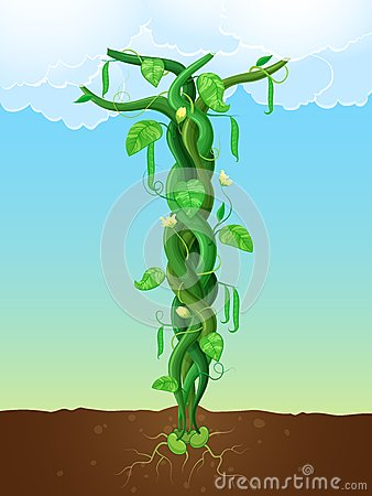 Free The Beanstalk Royalty Free Stock Image - 30891356