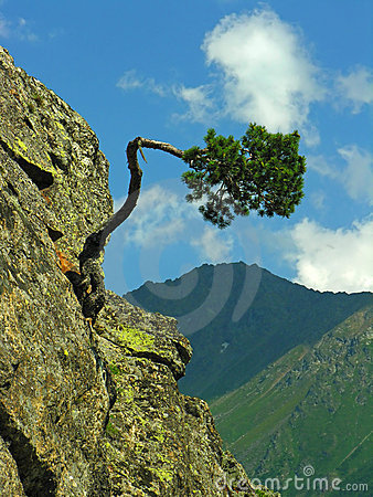 Free The Bent Tree Royalty Free Stock Photography - 3864557
