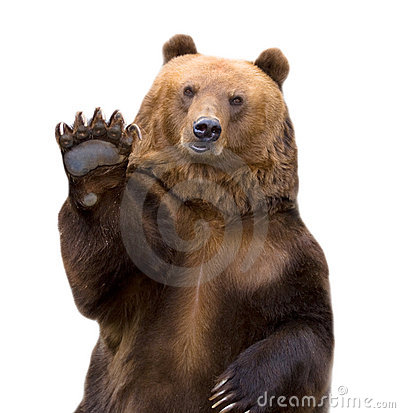 Free The Brown Bear Welcomes (Ursus Arctos). Royalty Free Stock Image - 10924546