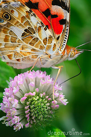 Free The Butterfly And Flower Stock Images - 5503984