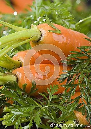 Free The Carrots & Rain Stock Photography - 2316682