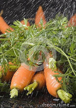Free The Carrots & Rain Royalty Free Stock Photo - 2316685