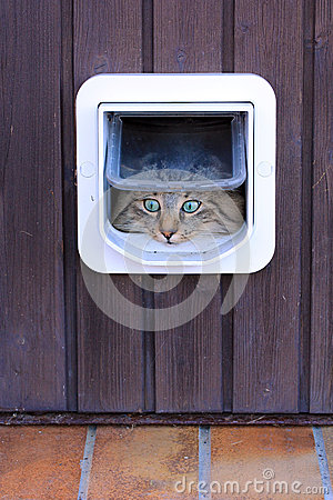 Free The Cat Flap Royalty Free Stock Photos - 34835568