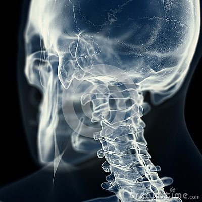Free The Cervical Spine Stock Image - 127837891
