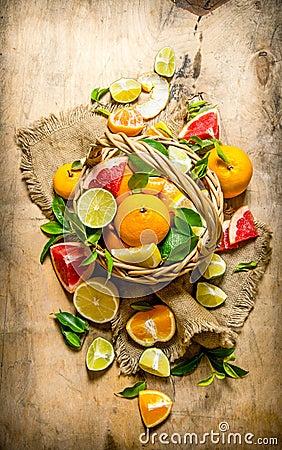 Free The Concept Of Citrus. Basket Of Citrus Fruits - Grapefruit, Orange, Tangerine, Lemon, Lime . Stock Images - 64811794