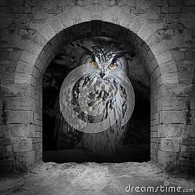 Free The Eagle Owl. Stock Photos - 33642533