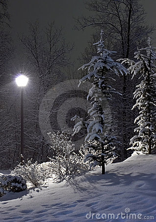 Free The Fir And Street Lamp Royalty Free Stock Image - 265306