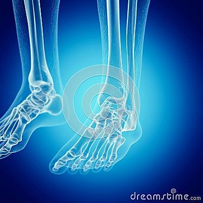 Free The Foot Bones Stock Photo - 127832110