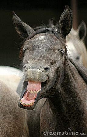 Free The Funny Horse Stock Photos - 4068733