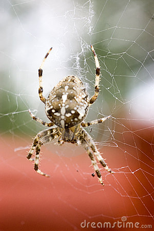 Free The Garden Spider Royalty Free Stock Photos - 1274058