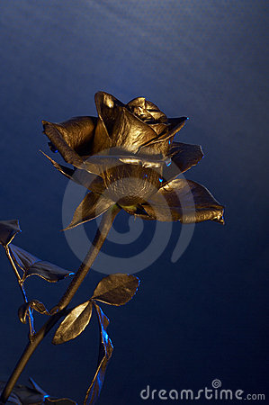 Free The Gold Flover Royalty Free Stock Photography - 2351457