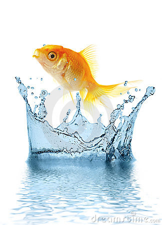 Free The Gold Small Fish Stock Photo - 2625910