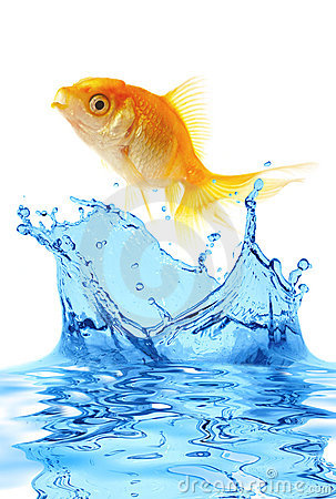 Free The Gold Small Fish Stock Photos - 2625913