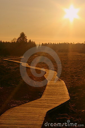 Free The Golden Path Royalty Free Stock Images - 4350519