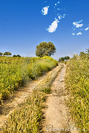 Free The Green Way Royalty Free Stock Image - 9389896