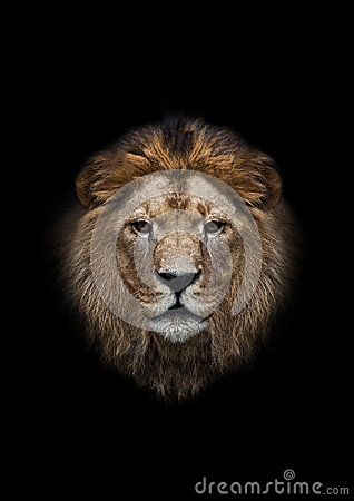 Free The Head Of A Lion Stock Photo - 33964900