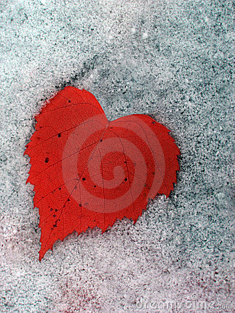 Free The Heart Of Winter Stock Images - 218614