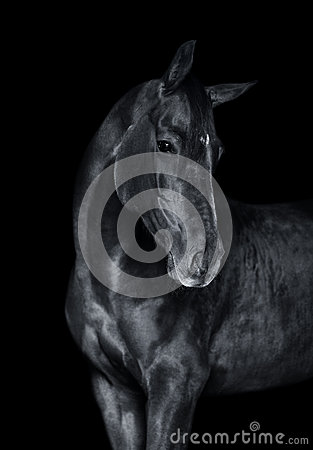 Free The Horse On Black Monochrome Portrait Stock Photo - 51073850