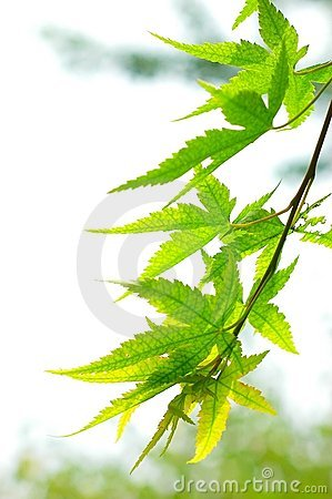Free The Leaf Stock Images - 5313054