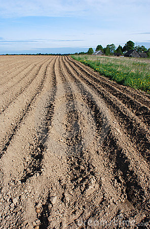 Free The Lithuanian Soil Royalty Free Stock Photo - 5457205