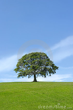 Free The Mighty Oak Stock Photo - 1438510