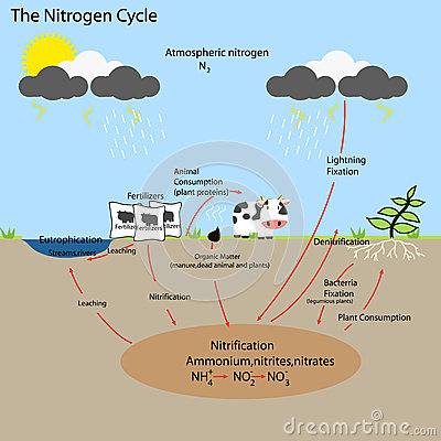 Free The Nitrogen Cycle Stock Photos - 60944083