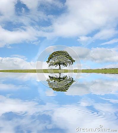 Free The Oak Tree Royalty Free Stock Photo - 4722405