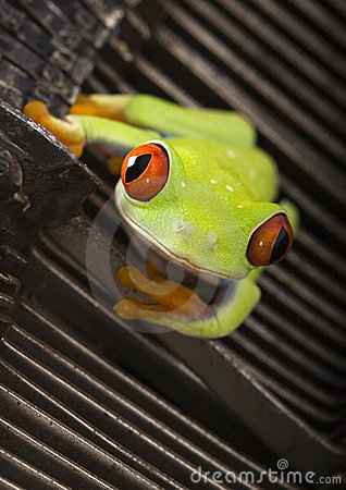Free The Office Frog Stock Photo - 2159920