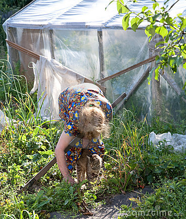Free The Old Woman Works In Garden Stock Photography - 10182862