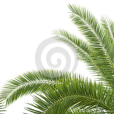 Free The Palm Tree Royalty Free Stock Images - 26653879
