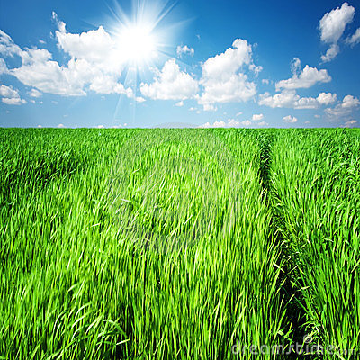 Free The Path Through The Tall Grass On A Green Field Stock Photos - 24082223