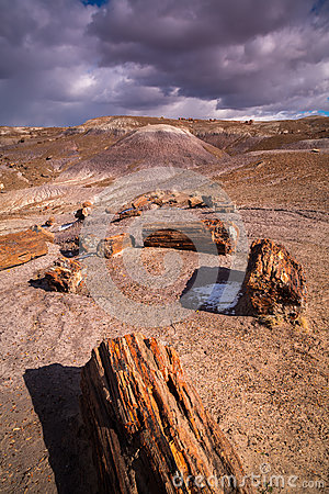 Free The Petrified Forest National Park Stock Images - 85226344